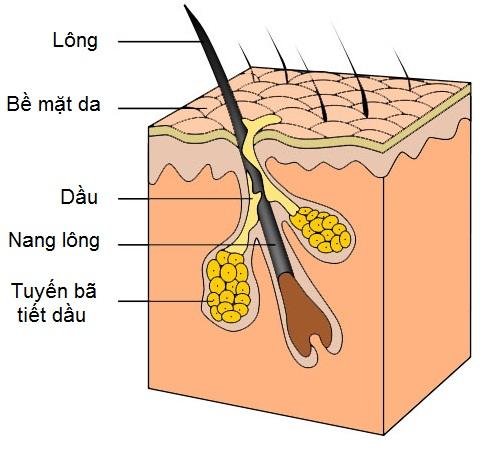 Bày cách trị mụn trứng cá hiệu quả bằng mặt nạ thiên nhiên 2