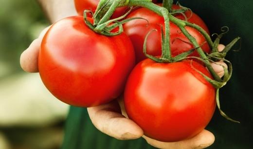 Cà chua trị mụn trứng cá và làm da trắng hồng